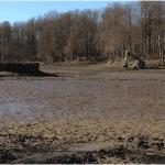 Aménagement d'un étang - Création d'une île